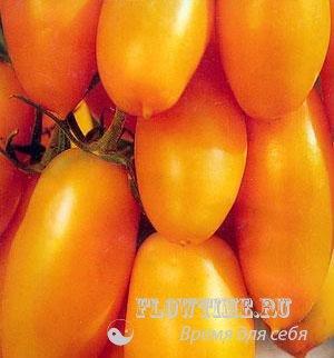 Помидоры выращивание томатов