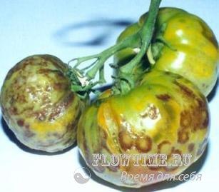 сад, огород, без хлопот, как вырастить, рассаду, томат, огурец, тыква, кабачок, картофель, теплица, перегной, болезни и вредители, сад, дача, посадки, как сделать, фазенда, яблоня, вишня, смородина, облепиха, слива, лук, чеснок, помидоры, капуста, как бороться, грызуны, удобрения, колорадский жук, гусеница, перец, клубника, земляника, виктория, ландшафтный дизайн, газон, альпинарий, альпийская горка, фитофтороз, гниль, кила, блошка, водоем на, клумба, бассейн, постройки, участок, парник, горох, бобы, черноплодка, малина, как подрезать, беседка, посадка в теплицу, посадка открытый грунт, посадка, подкормка, газон, кустарник, плодовые деревья, дорожки, декоративные элементы, партерный газон, луговой газон, мавританский газон, уход за, зимой, весной, осенью, летом, декоративный, водоем, пруд, бассейн, плитняк, гравий, кирпич, плиты, натурального камня, пробок, брусчатки,природного камня, своими руками, мощеные, баклажан, лук, севок, батун, порей, дача, участок, приусадебный участок, усадьба
