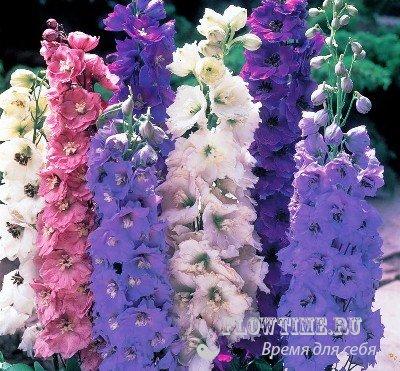 Фото подушек с цветами черно белыми