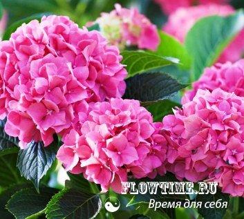 Каталог цветы в саду и огороде 11