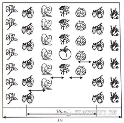 сад, огород, грибы, съедобные,
