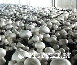 Сад огород грибы съедобные